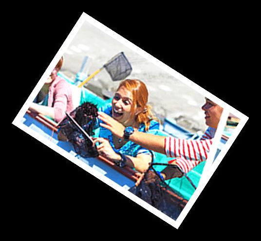 採海膽體驗