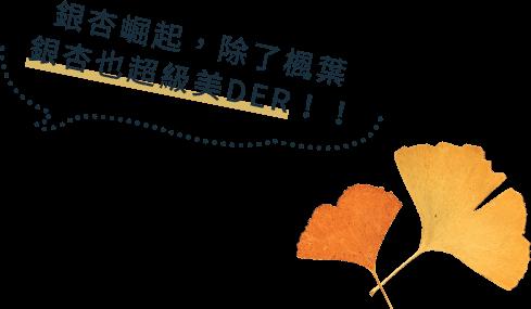 北海道大學銀杏