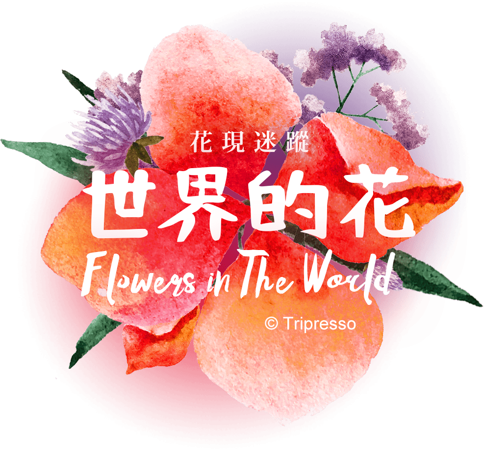 花現迷蹤.世界的花 Flowers in The World