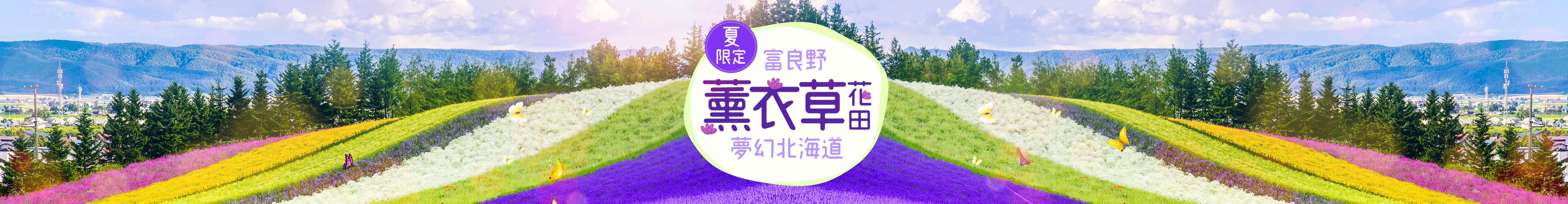 北海道薰衣草