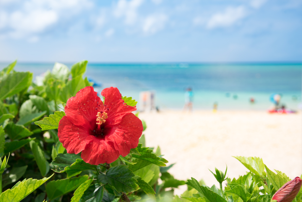 沖繩-自駕海島遊