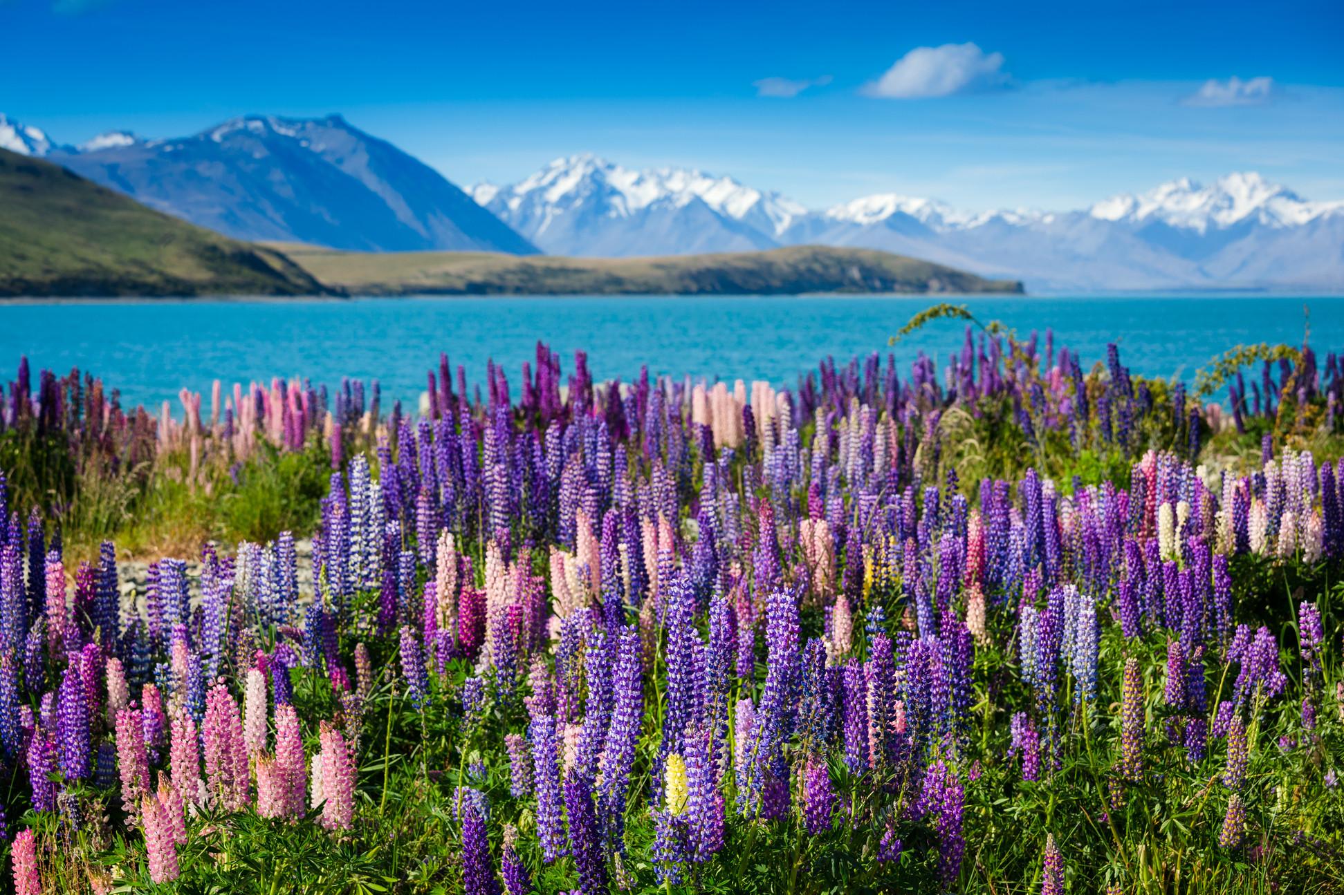 紐西蘭-南半球避冬