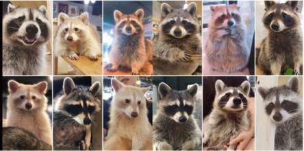 玩咖專欄_【首爾景點】咖啡廳也有浣熊、狐獴、綿羊?韓國動物咖啡廳七選
