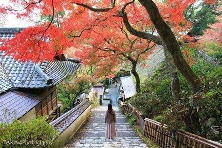 玩咖專欄_2019日本紅葉|九州賞楓推薦景點TOP7,福岡、鹿兒島、佐賀最美楓葉