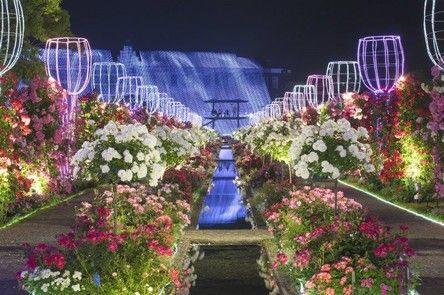 玩咖專欄_日本旅遊|如夢似幻的長崎豪斯登堡玫瑰花園,最新日本景點不能錯過!